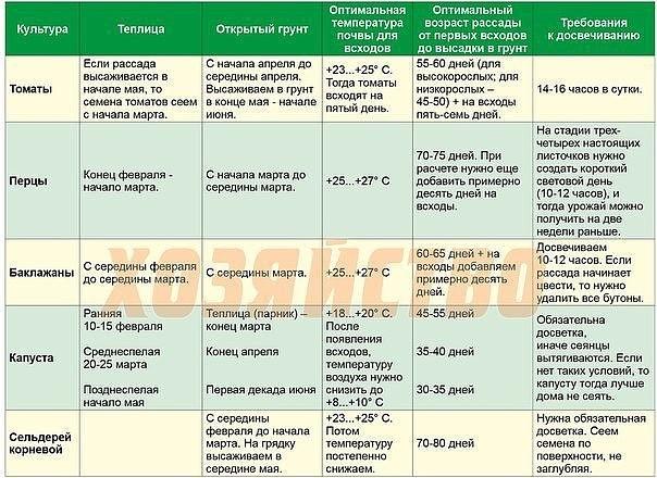 Сроки и правила посадки цветной капусты в открытый грунт 2021 года