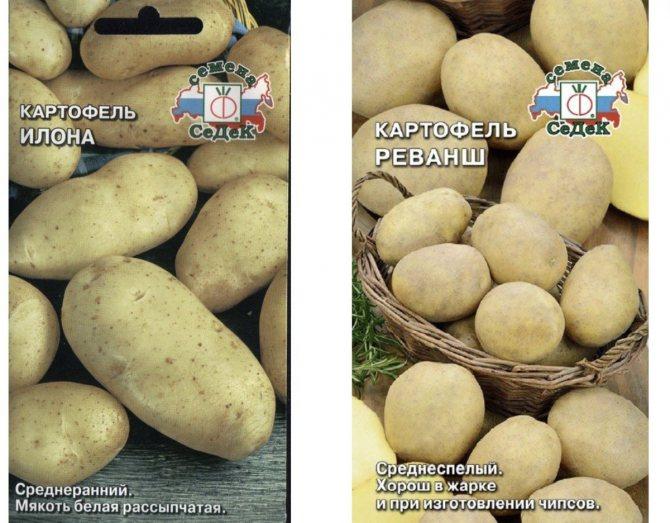 Картофель: описание 73 лучших сортов (фото & видео) +отзывами огородников