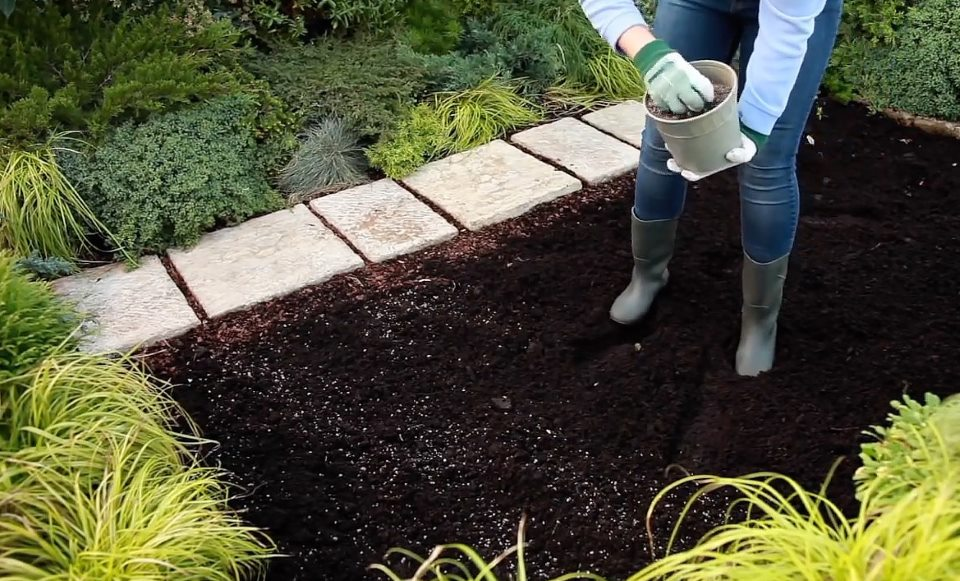 Как посадить хрен в огороде, правила его выращивания и размножения