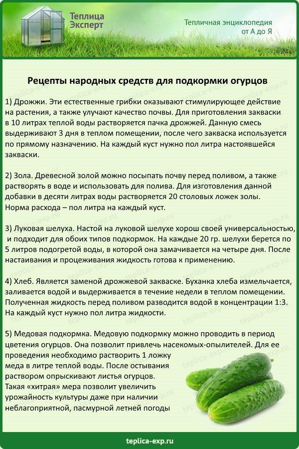 Натуральные удобрения для капусты: когда и как удобрять капусту | огородники