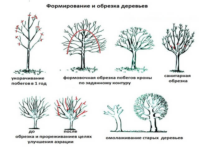 Посадка вишни: правила и особенности посадки дерева. выбор места, времени и особенности ухода за саженцами (видео + 95 фото)