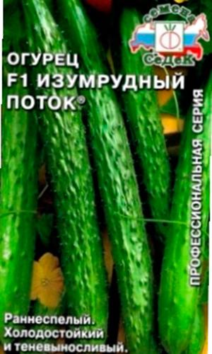 Огурцы изумрудная семейка: характеристика и описание гибридного сорта с фото