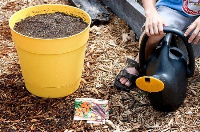 Чем подкормить рассаду в домашних условиях для хорошего роста: лучшие удобрения, виды, рекомендации
