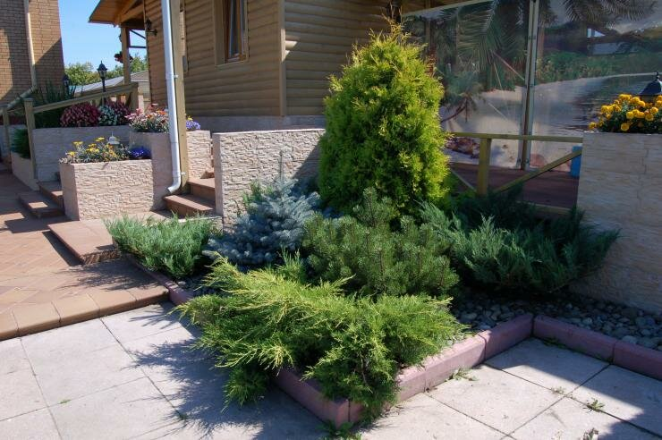 Хвойные с узкой кроной: вертикальные акценты в дизайне сада