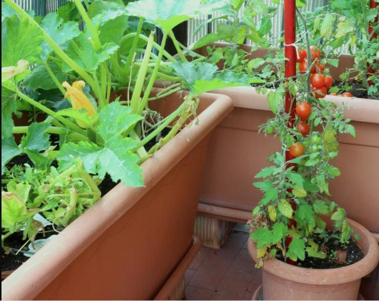 Выращивание тыквы: хитрости и секреты большого урожая