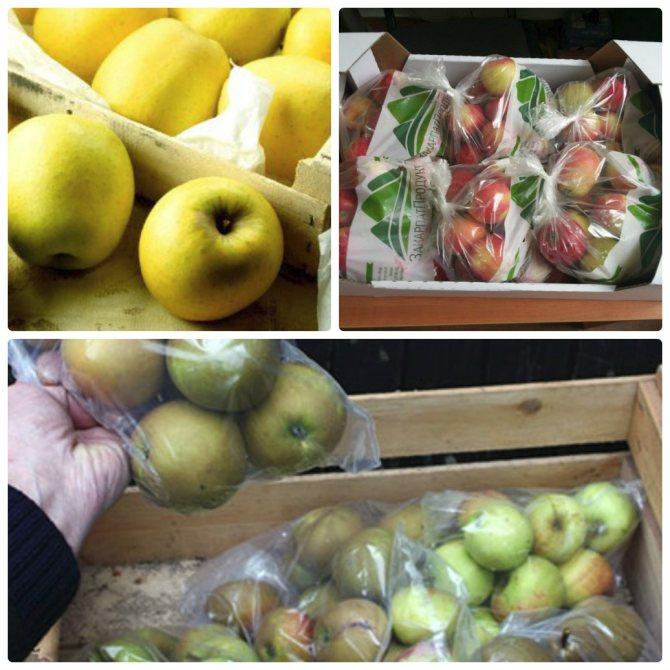 Как хранить абрикосы: 8 проверенных способов