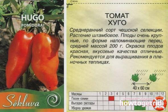 Томат дубрава: 135 фото и видео описание как посадить и вырастить правильно вкусный сорт