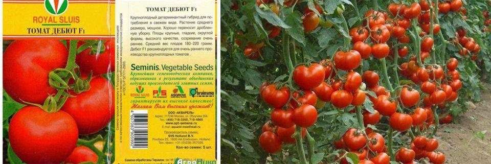 Томат дебют: описание и характеристика, отзывы, фото, урожайность | tomatland.ru