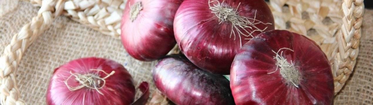 Крымский лук или ялтинский: как выращивать красный из семян в средней полосе, как вырастить белый в подмосковье, сладкий