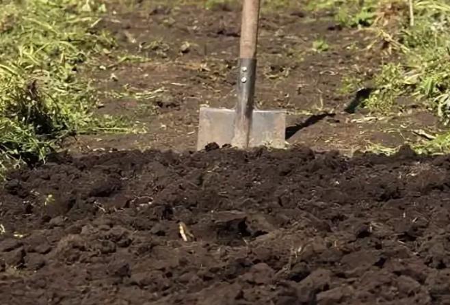 Нужно ли перекапывать землю? [ответ эксперта]