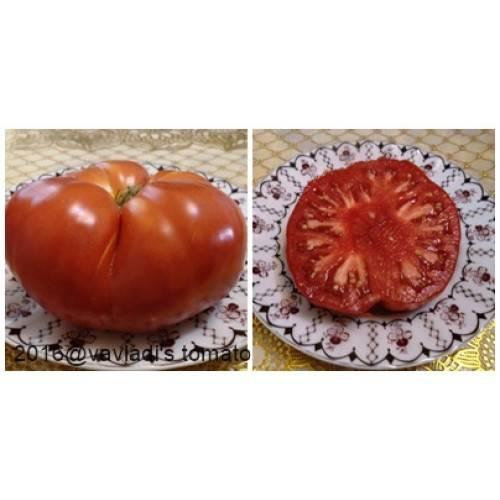 Томат испанский гигант: характеристика и описание сорта, отзывы об урожайности помидоров, фото куста в высоту