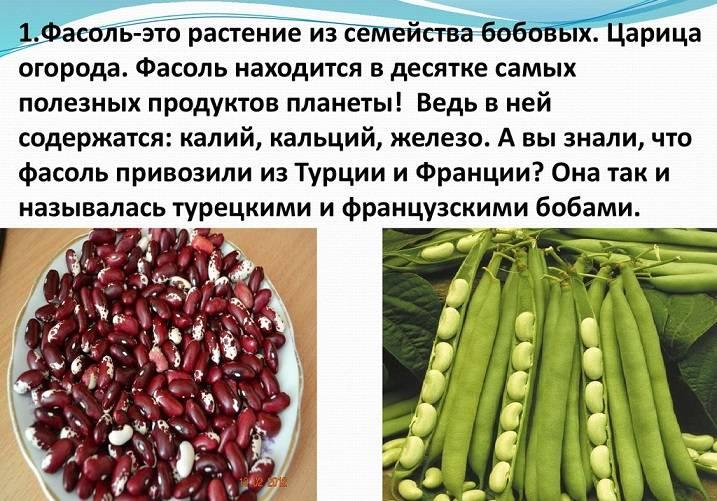 Фасоль: польза и вред фасоли для здоровья, состав, калорийность на 100 грамм, бжу