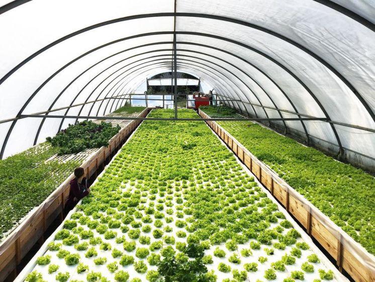Выращивание укропа и уход за ним: как вырастить зелень в открытом грунте и теплице