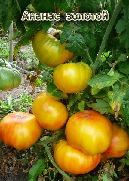 Томат гавайский ананас: характеристика и описание сорта, отзывы