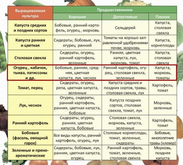 «ленивая» капуста, или выращиваем капусту без рассады. подготовка грядки, посев, уход. фото — ботаничка.ru