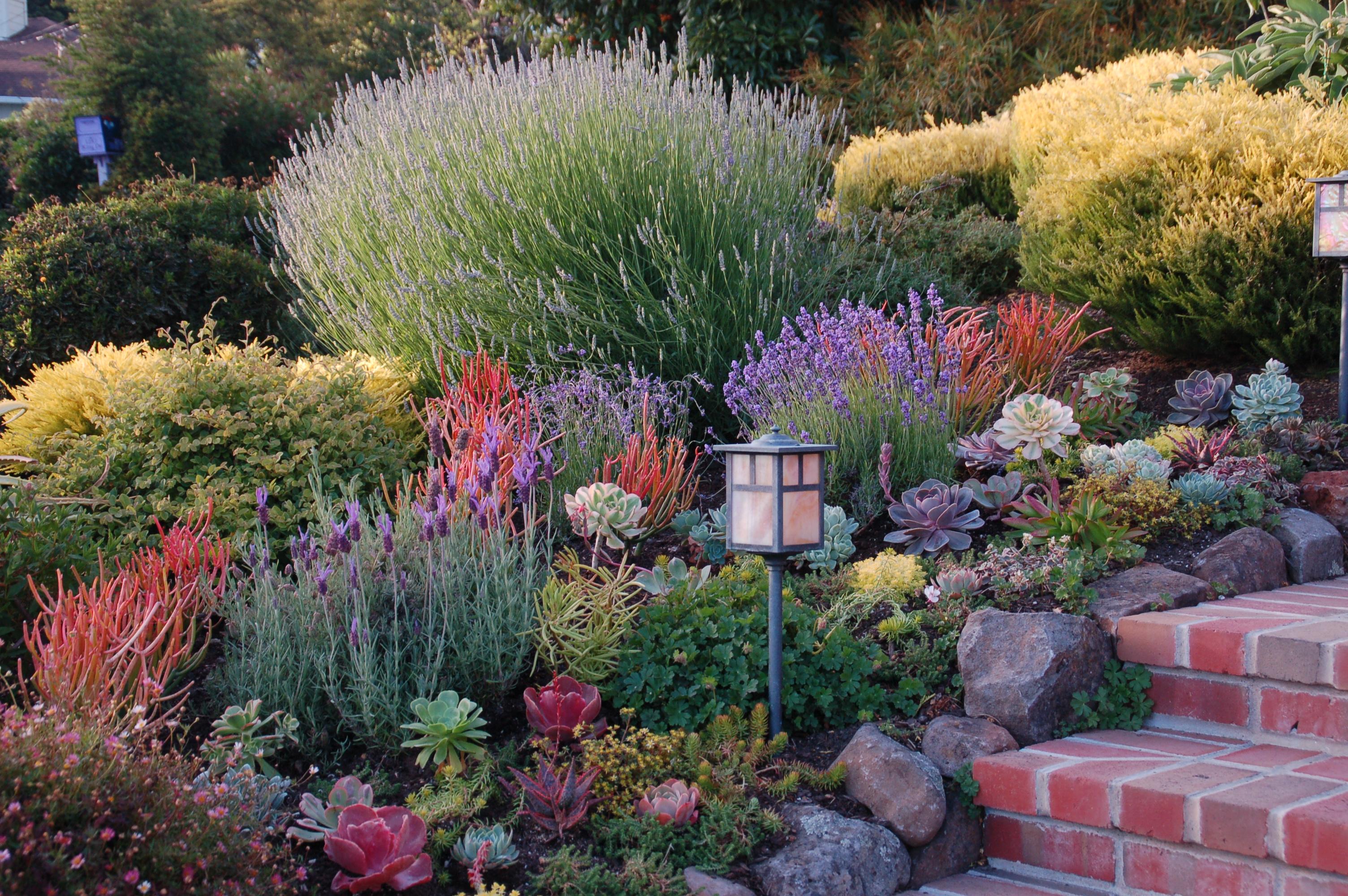 Лаванда в саду: с какими цветками и какую садить в цветнике   сайт о саде, даче и комнатных растениях.