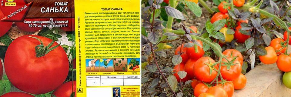 Лучшие низкорослые томаты для открытого грунта и теплицы без пасынкования - для средней полосы россии, сибири и урала
