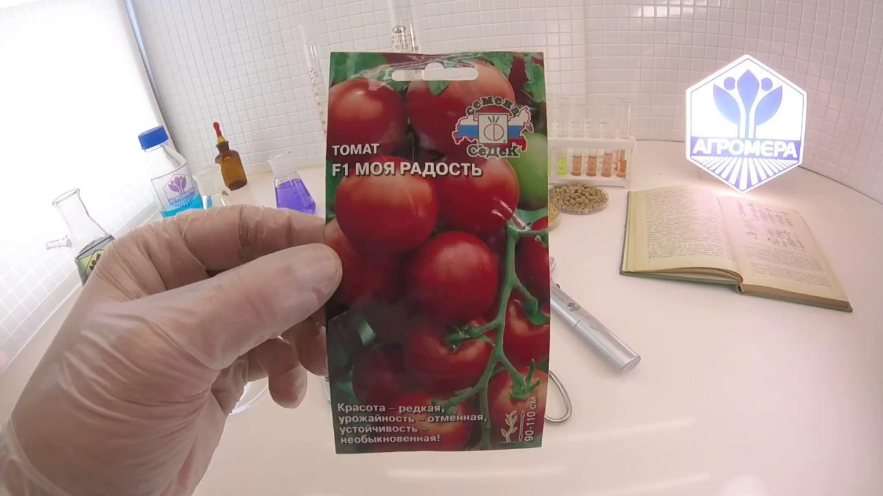 Томат «комнатный сюрприз»: описание сорта и рекомендации по выращиванию помидоры русский фермер