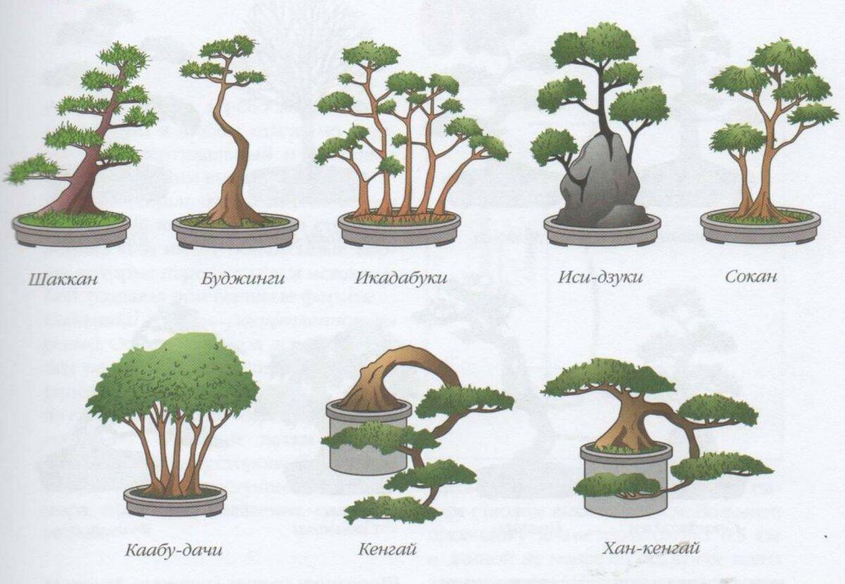 Какие растения подходят для выращивания в стиле бонсай на supersadovnik.ru