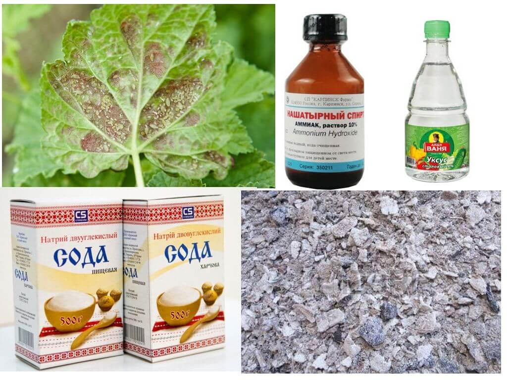 Обработка груши весной от вредителей и болезней, чем опрыскивать при ржавчине и прочее