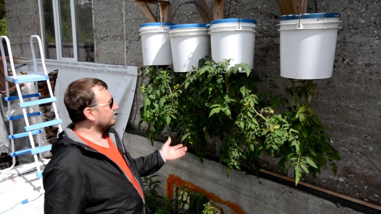 О выращивании растений в перевернутом виде: помидоры вверх ногами