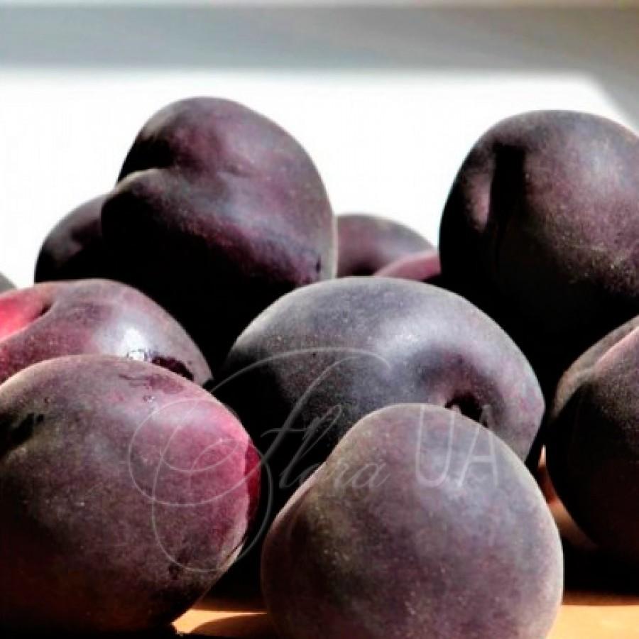 Чёрный принц — абрикос с необычным цветом