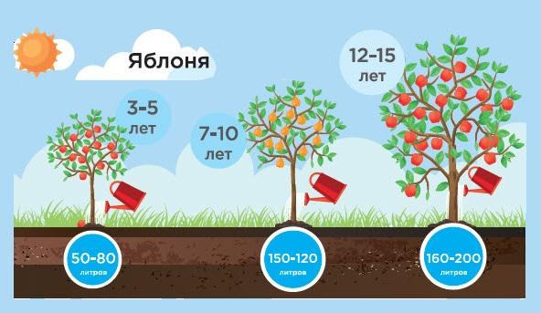 Полив яблонь – как правильно составить график ухода во время плодоношения? + видео