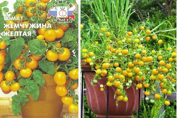 Какие сорта помидоров лучше сажать на балконе - сам себе сад