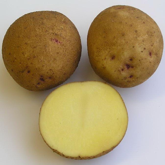 Описание сорта картошки чародейка