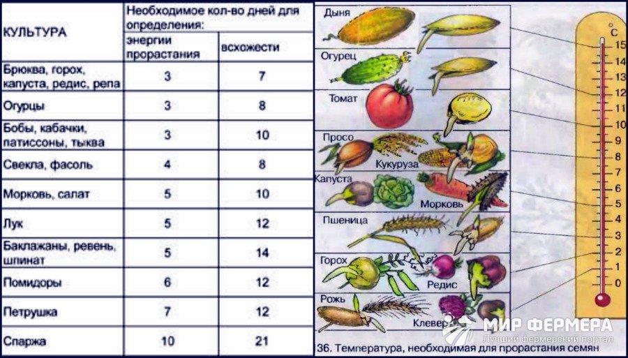Как проверить всхожесть семян помидоров — перед посадкой, в домашних условиях, способы