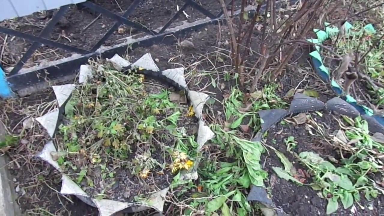 Хранение хризантем на зиму: как сохранить зимой в подвале, другие способы