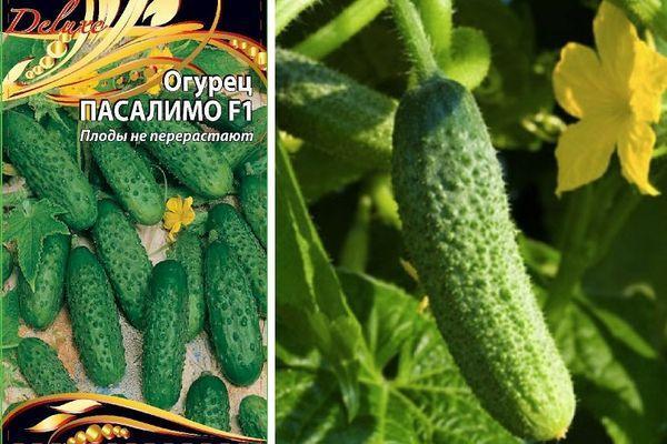 Огурец пучковое великолепие f1: отзывы, фото огородников, описание и характеристика корнишона, выращивание, посадка и уход, урожайность