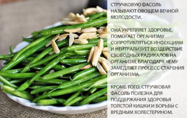 Лучшие сорта спаржевой стручковой фасоли для различных регионов россии
