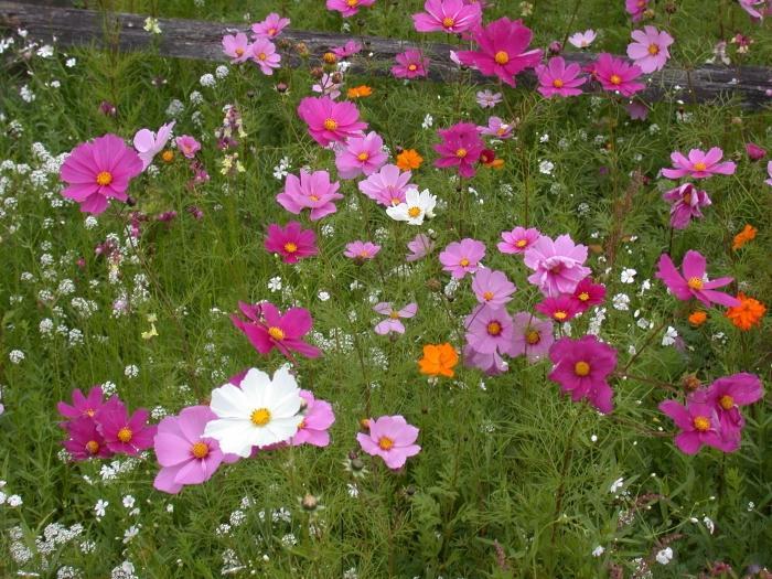 Однолетние цветы - виды, сорта, особенности выращивания и посадки (135 фото + видео)