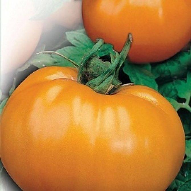 """Томат """"бизон черный"""" и другие разновидности сорта помидор """"розовый"""", """"желтый"""", """"оранжевый"""", описание и фото русский фермер"""