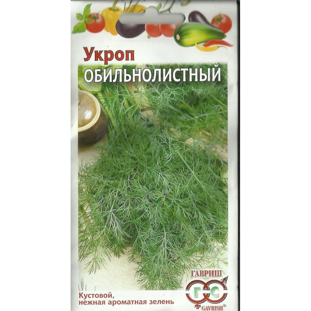 Укроп кустовой без зонтиков на зелень: лучшие сорта, особенности посадки, дальнейший уход