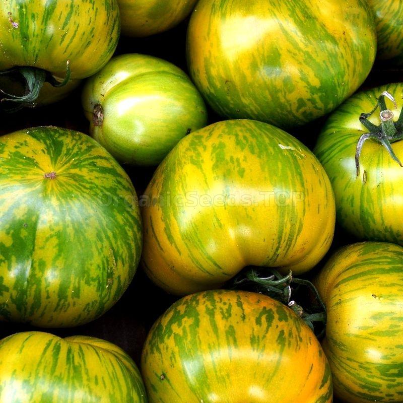 Томат зебра оранжевая: описание, фото, отзыв, урожайность сорта