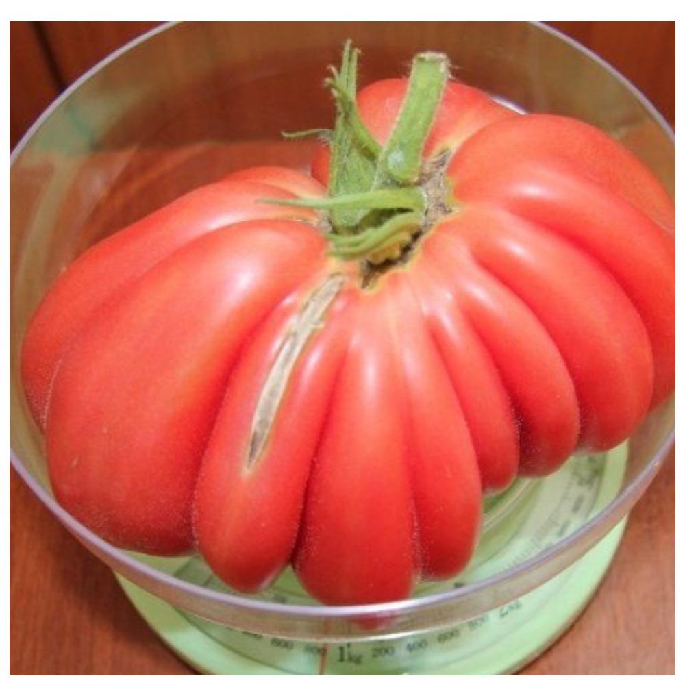 Характеристика и особенности выращивания томата инжир красный