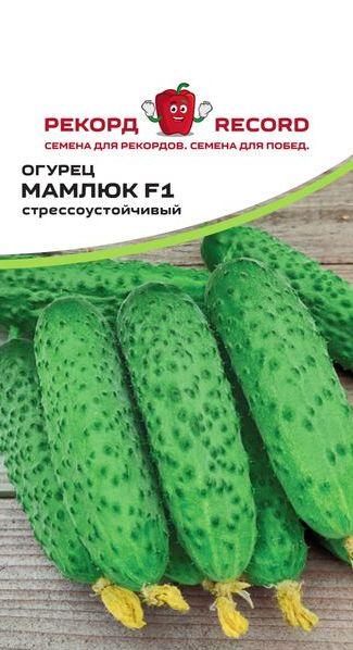 Огурец мамлюк f1 - отзывы о сорте, описание, фото