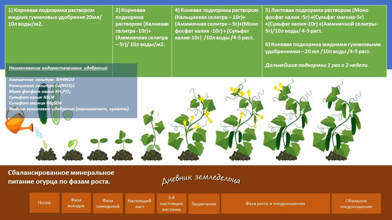 Божья коровка на даче: описание, жизненный цикл, виды, чем полезна, как привлечь, какие растения посадить, чем подкормить
