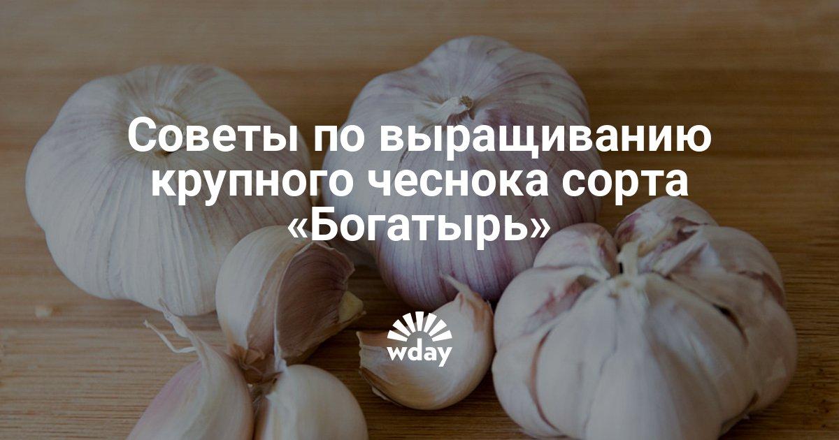 Представители лучших сортов чеснока для выращивания, с описанием