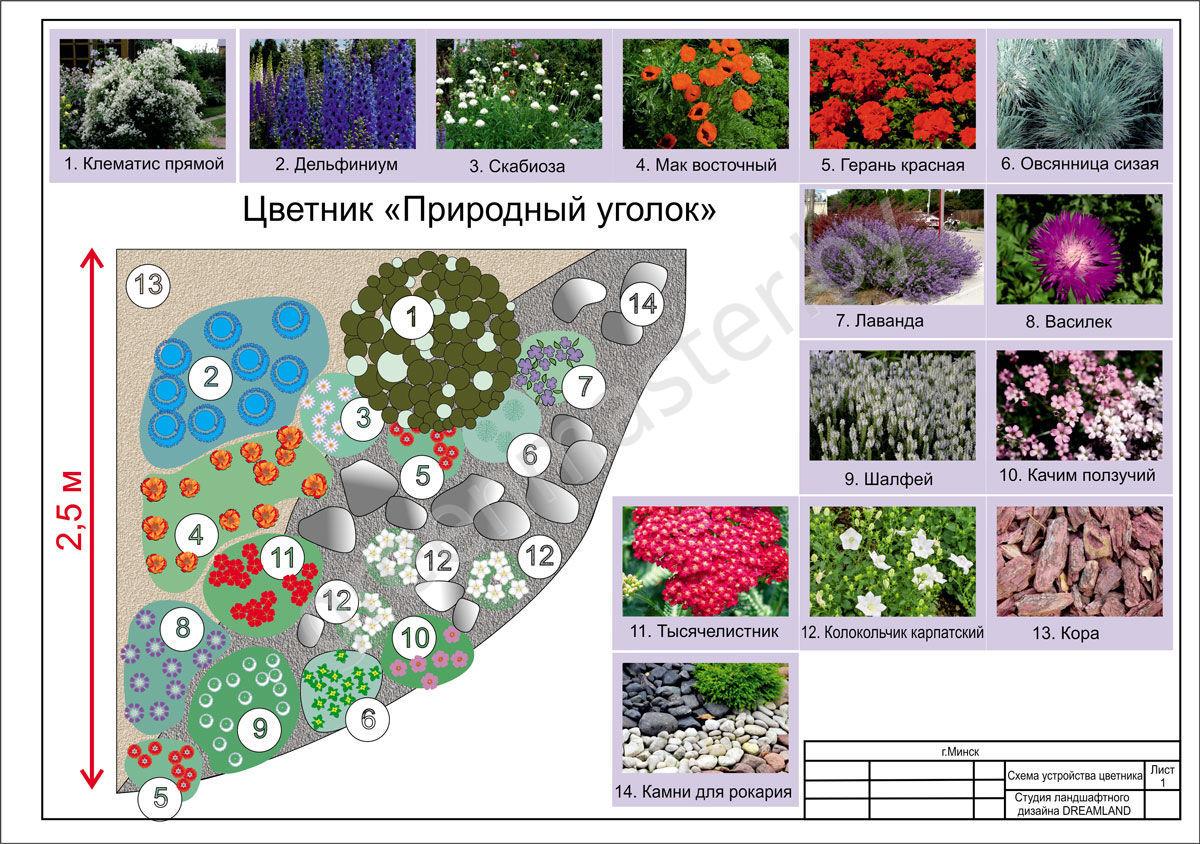 Многолетние и однолетние растения в дизайне сада: фото, примеры композиций