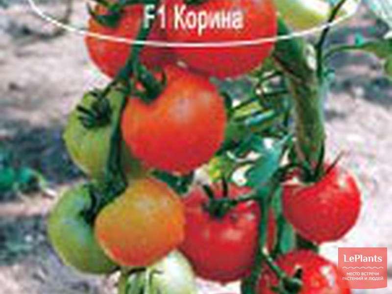 Томат катрина f1: описание, урожайность сорта, фото, отзывы