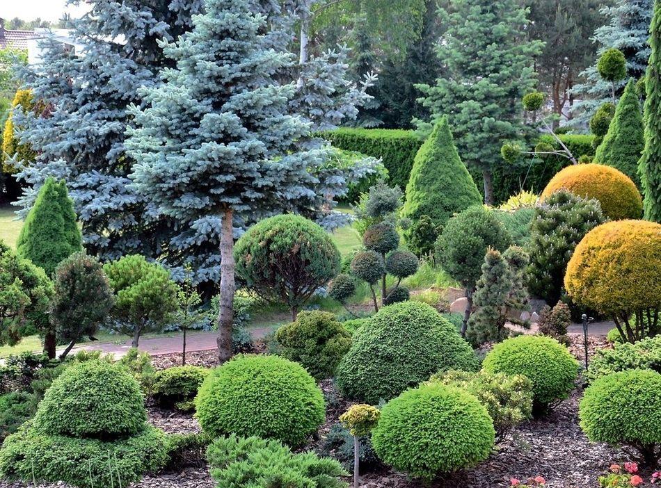 Карликовые деревья для сада и дома: особенности посадки и ухода