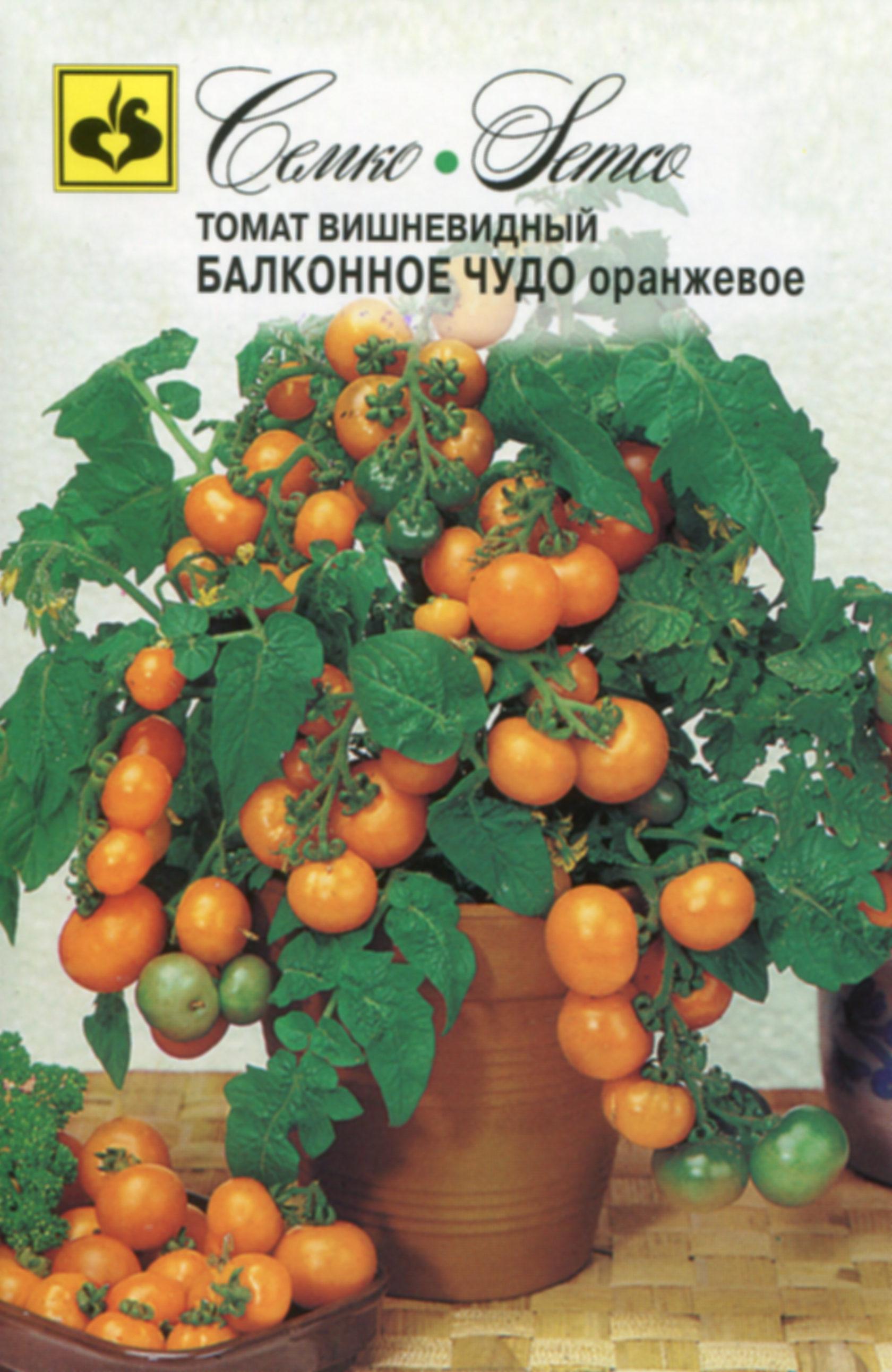 Томат оранжевое чудо характеристика и описание сорта