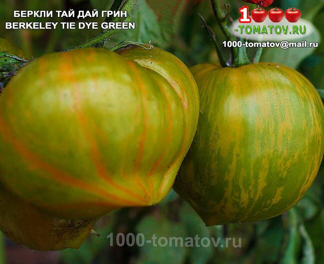 """Томат беркли тай дай хаат - описание сорта, отзывы, урожайность - журнал """"совхозик"""""""