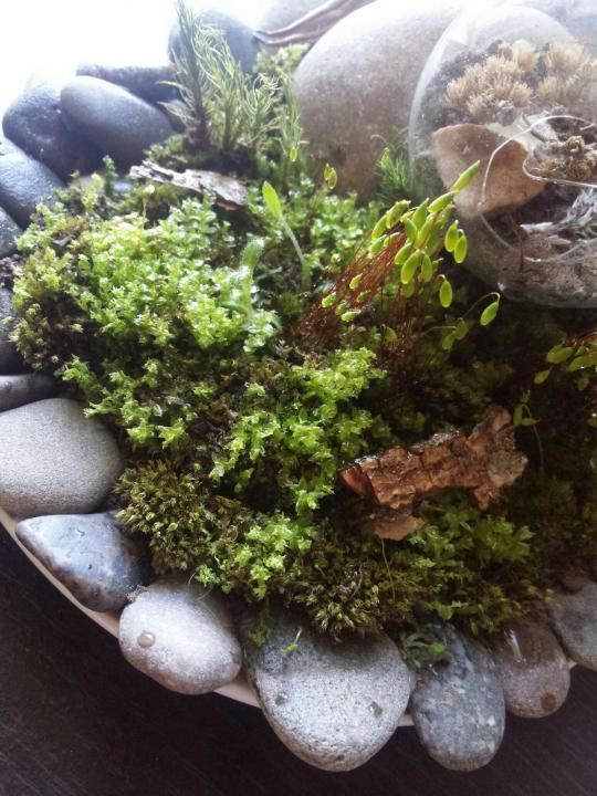 Как избавиться от мха и лишайников на плодовых деревьях – аграрий