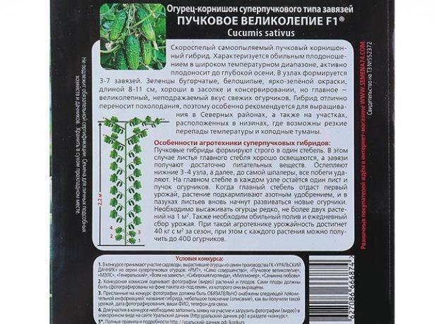 Огурцы пучковые: особенности выращивания и выбор сорта