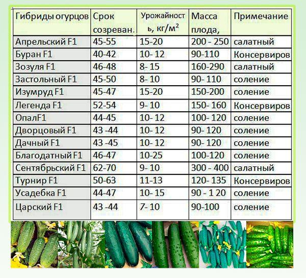 Как выращивать огурцы в ленинградской области: особенности, сроки