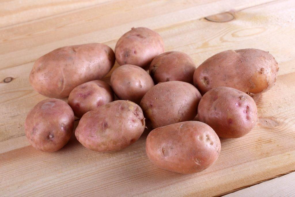 Картофель лаура: описание сорта, фото кустов и созревшей картошки, отзывы об урожайности и сложностях выращивания